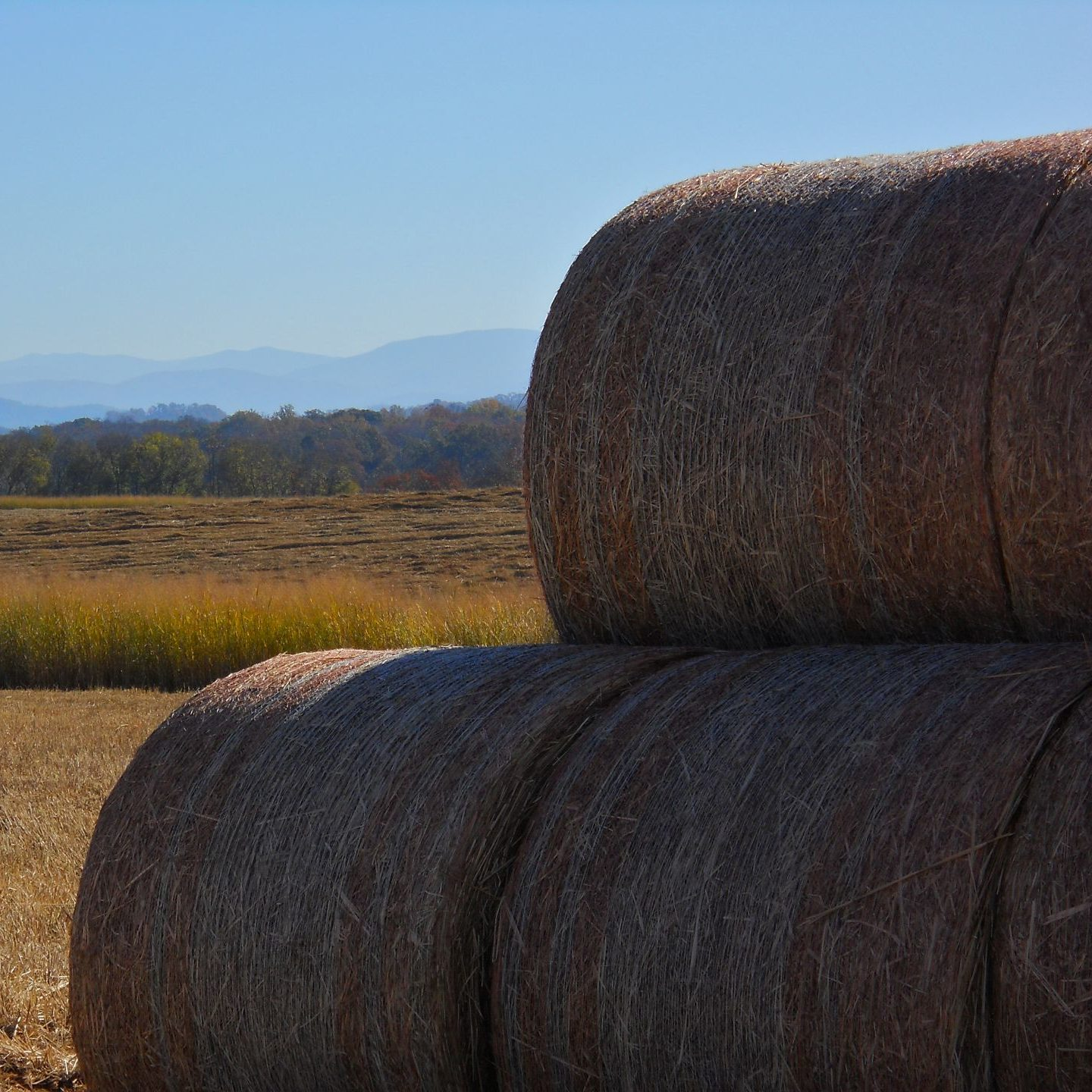 switchgrass bales in foreground in a field with mountains in background
