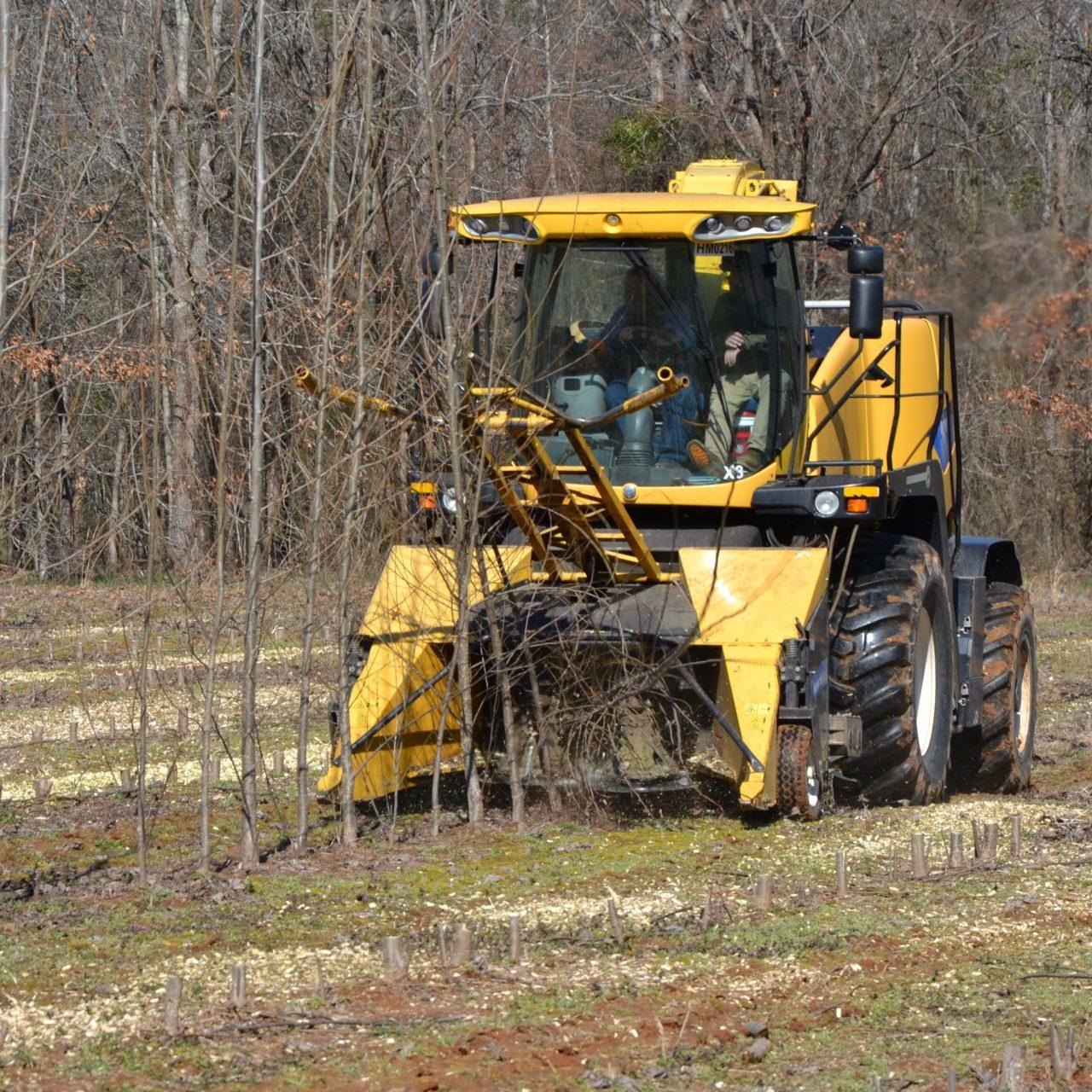 Woody crop harvesting
